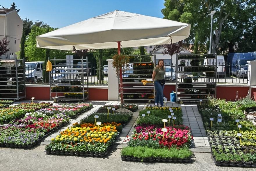 Otvoren 18. Festival cvijeća u Sv. Filipu i Jakovu
